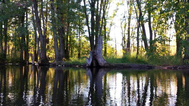river bank with old tree stump
