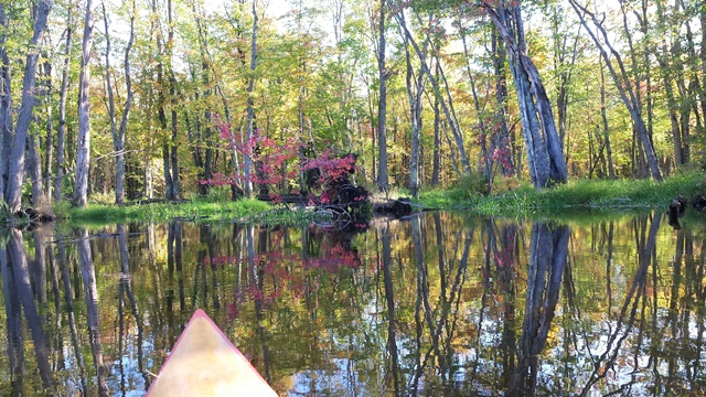kayak on the river